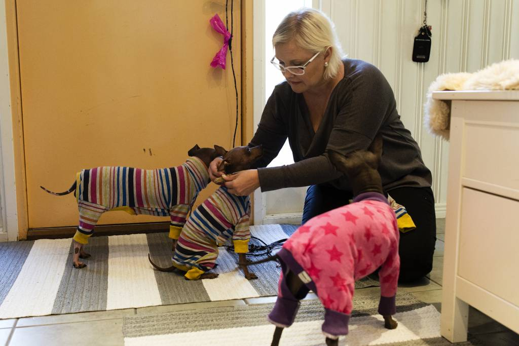 Vaasan: Yhteisen iltahetken puolesta, Vantaalla Siltalan perheessä. Kuvassa Hanna Siltala pukemassa perheen koiria iltalenkkiä varten.